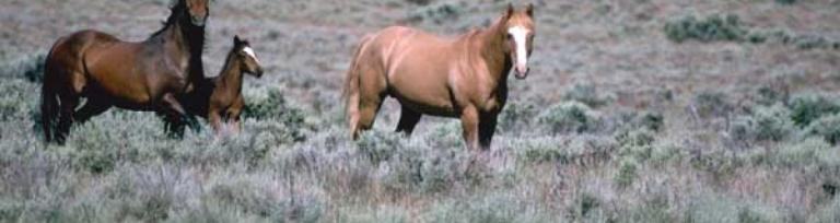 Bay and chestnut horses common coat colors - equestrian business often require freight ferry services