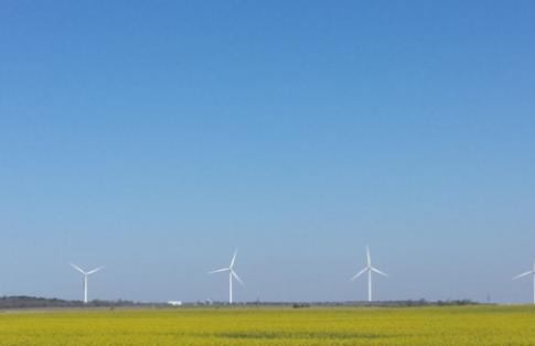Wind Turbine Field